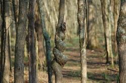 solmupuu